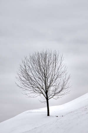 snow field: A single tree on a snow covered hill