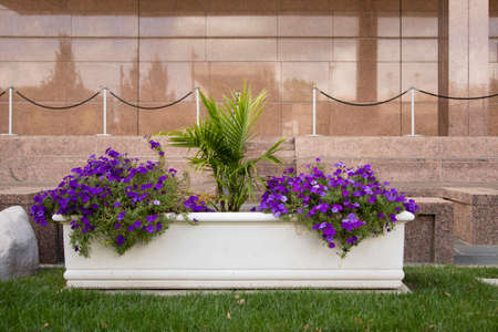 flower pot: A white planter with purple flowers outside a brown marble building wall.