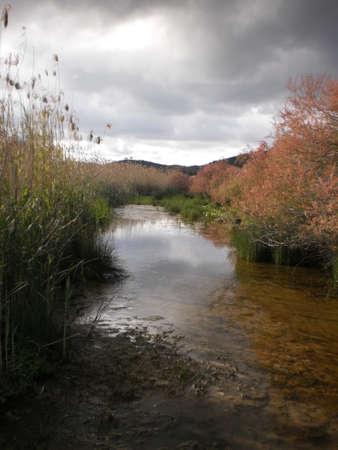 bayou swamp: Bayou in Vravrona