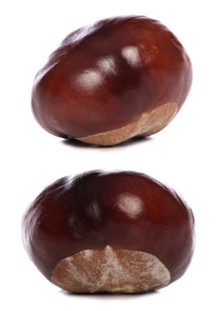 horse-chestnut conkers isolated studio cutout photo