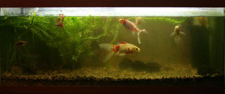 dirty: dirty Coldwater fish tank Stock Photo