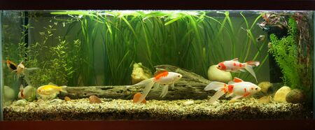 coldwater: Coldwater fishtank