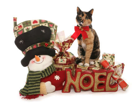 moggy: Moggy Christmas Cat sitting on presents Studio cutouts