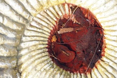 dead leaves: F�siles y muertos deja abstracto