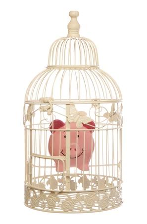 piggy bank in bird cage studio cutout photo
