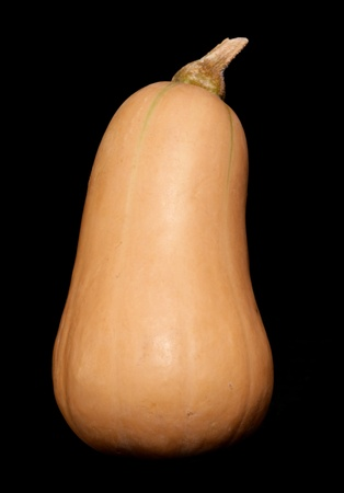 Butternut Squash Isolated on a back background