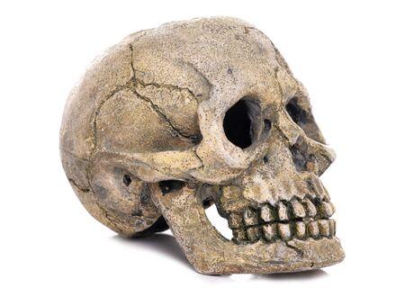 skull fish ornament on white background Stock Photo - 10871680