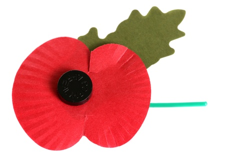 Remembrance day poppy on white background photo