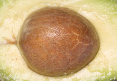 pip: Avocado pip Abstract background texture