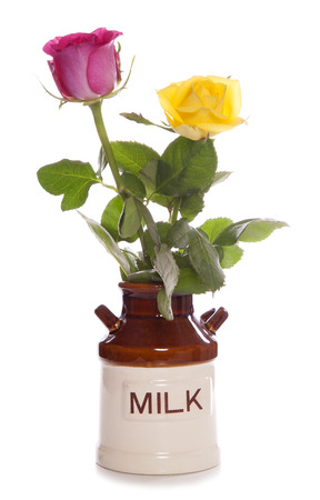 two roses in a vintage milk jug studio cutout Stock Photo - 22883204