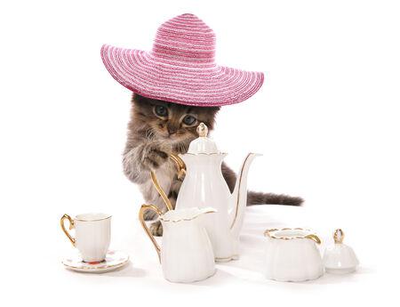 themed: Kitten having high tea