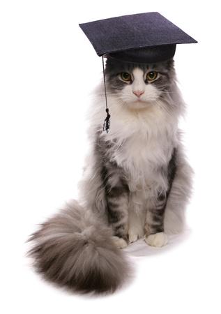 メインあらいくま先生帽子