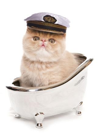 お風呂で子猫 写真素材