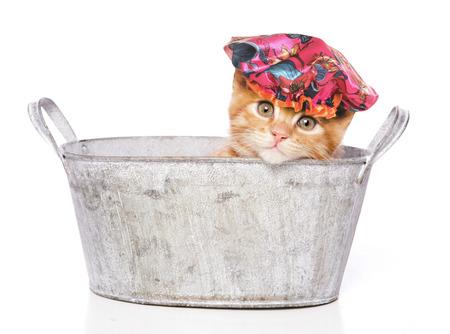 シャワー キャップを持つバースの猫 写真素材