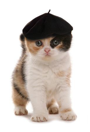 kitten with artist beret hat