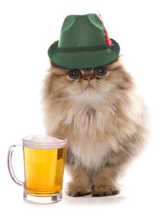 バイエルンのビール祭の帽子を身に着けているペルシャ猫