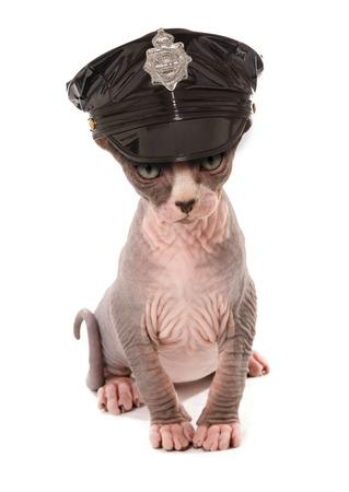 kinky: stripper kitten wearing kinky police hat