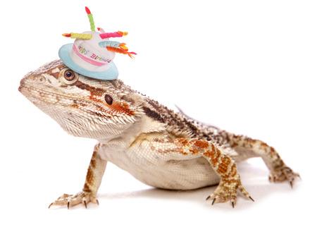 ひげを生やしたドラゴン誕生日の帽子をかぶって 写真素材