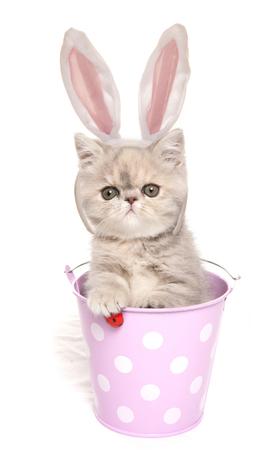 イースターのためにウサギの服を着た猫