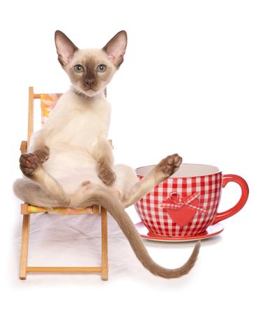 低温のお茶と猫