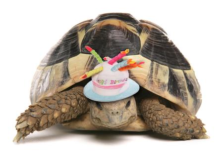 お誕生日おめでとう亀