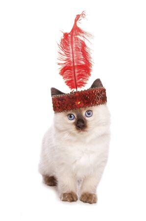 flapper: Gatito de Ragdoll con una diadema recorte chica de la aleta