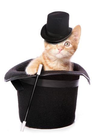 シルクハットの切り欠きの中の子猫の魔術師