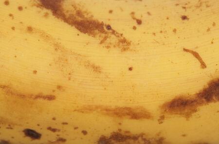 platano maduro: pl�tano maduro textura de fondo abstracto