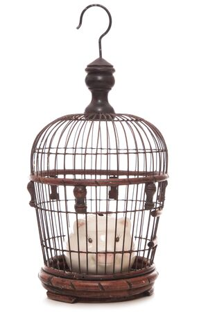 pig out: piggy bank trapped in a cage cutout