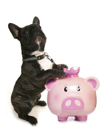 幸せピンクのブタ貯金箱の素材