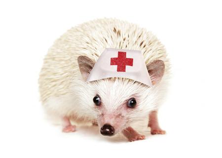 cutout: Pygmy hedgehog wearing a nurse hat cutout Stock Photo