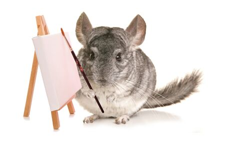 to cut out: chinchilla artist studio cut out Stock Photo
