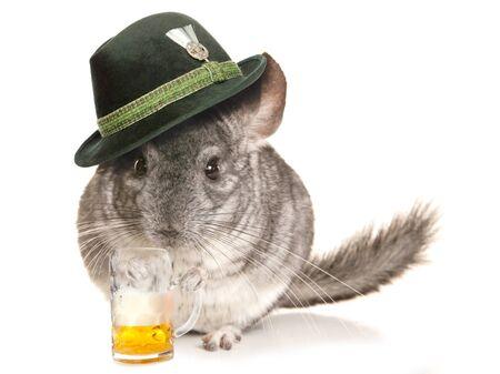 lanigera: Chinchilla wearing beer festival hat with pint cutout