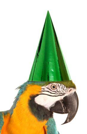 compleanno: pappagallo indossa un cappello di festa di compleanno ritaglio dello studio
