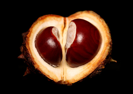 conkers: love shape conkers on black background