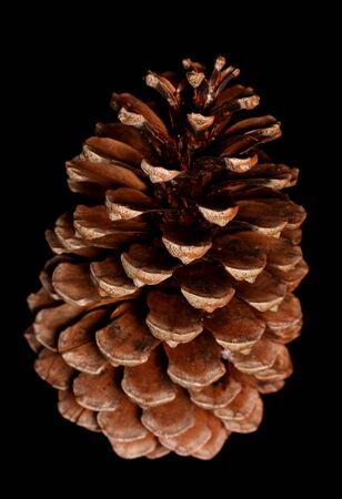 pine cone: single pine cone on black background Stock Photo