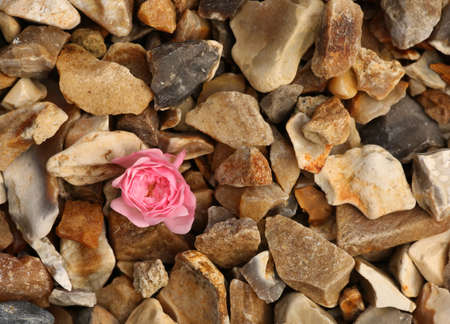 石の上で単一のバラの花 写真素材