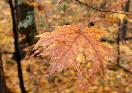 A autumn leaf reaching out. photo