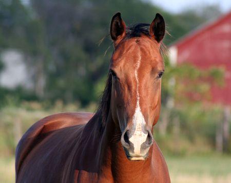 A concernées cheval à la ferme.  Banque d'images - 508146
