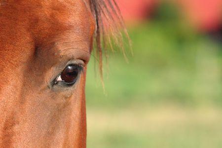 A closeup of a horses eye.