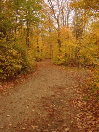 A beautiful autumn dirt path way, shot at algonquin park. photo
