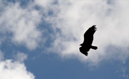 The silhouette of a bird of prey against a cloudy blue sky.