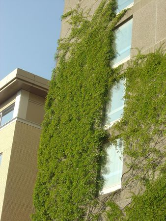 An ivy covered building on a university campus.