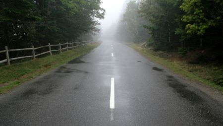 murk: A road leading through a forest cast in fog.