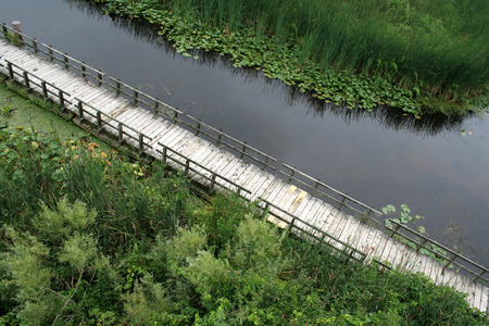 bullrush: The boardwalk cutting through the marsh at Point Pelee National Park, in Canada.  Stock Photo