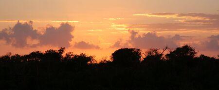 The jungle treeline at dusk just after sunset.