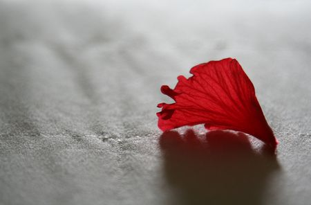 A red flower petal sitting on a bed, shot with an extremely shallow depth of field.