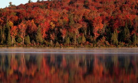 The early morning light shining on the beautiful autumn colors reflecting on a lake of Algonquin Park in Ontario, Canada. photo