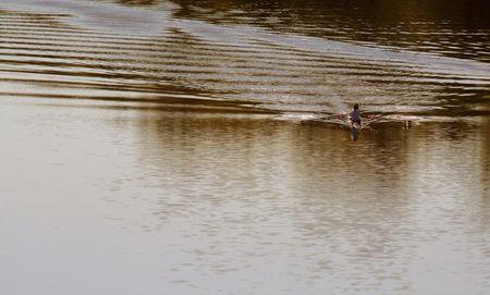 skimming: Un kayak rozando el r�o.