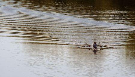 skimming: A kayakers descremado al otro lado del r�o.